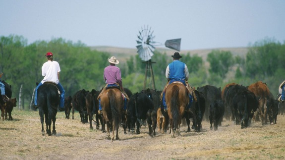 Good CME Feeder Cattle Futures Specifications
