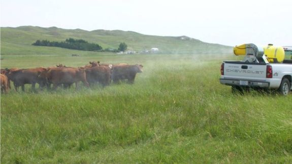 Cattle 101: History, Breeds, Fun Facts, Terms - Beef2Live